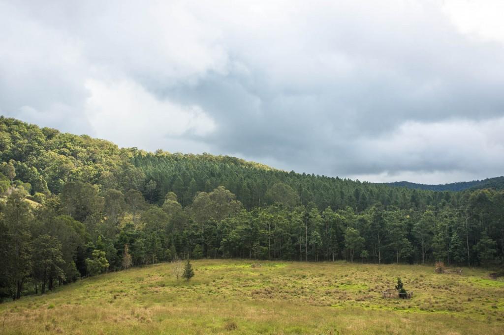 Alexander Forest